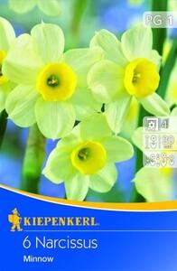 Kiepenkerl Blumenzwiebel Narzisse Minnow ,  Narcissus tazetta, Inhalt: 6 Stück