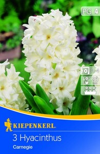 Kiepenkerl Blumenzwiebel Hyacinthus Carnegie ,  Hyacinthus orientalis, Inhalt: 3 Stück
