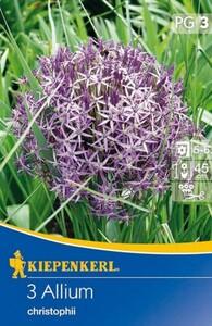 Kiepenkerl Herbstblumenzwiebel Allium christophii ,  Allium christophii, Inhalt: 3 Stück