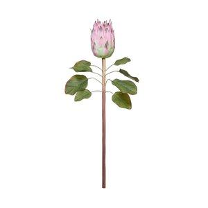 FLORISTA Protea L 60cm