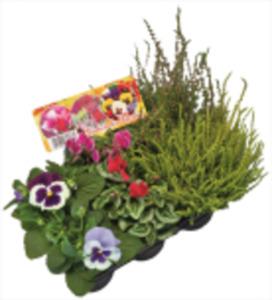 Heidegarten Winterhart oder Blühmix