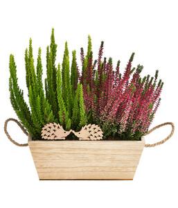 Holz-Jardiniere 'Calluna'