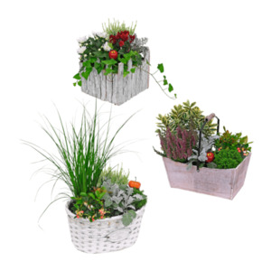 GARDENLINE  Bepflanztes Gefäß