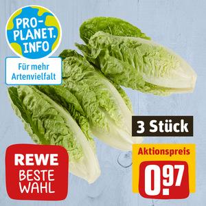 REWE Beste Wahl Salat
