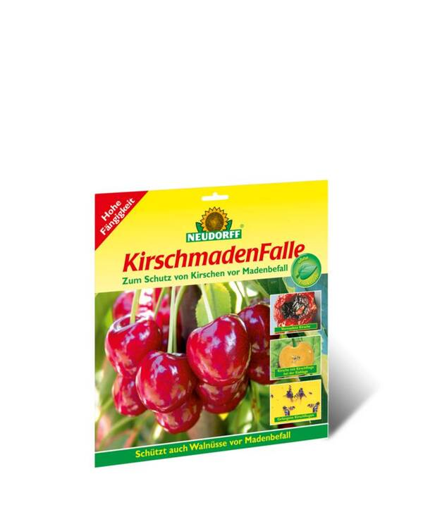 Kirschmaden Falle Neudorff