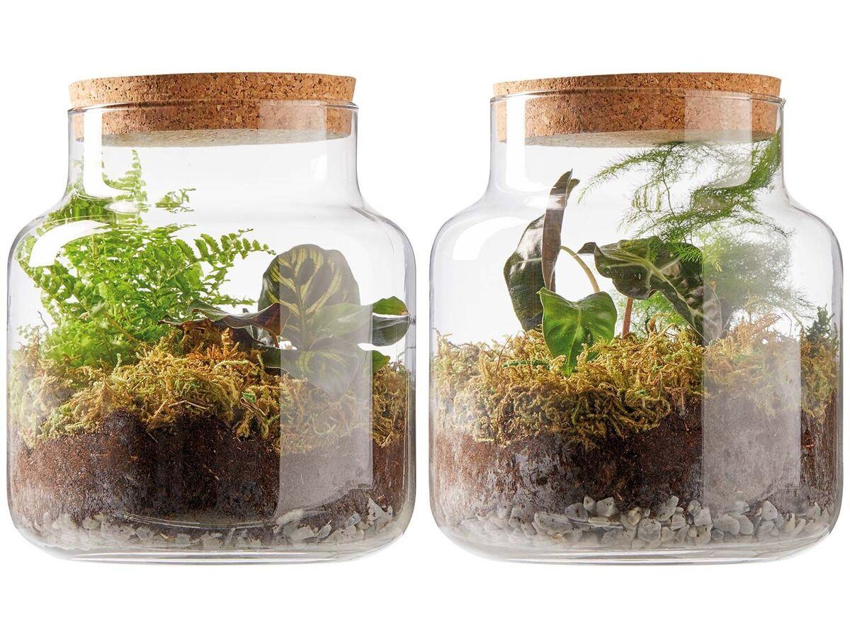 Bild 1 von Pflanzen-Terrarium