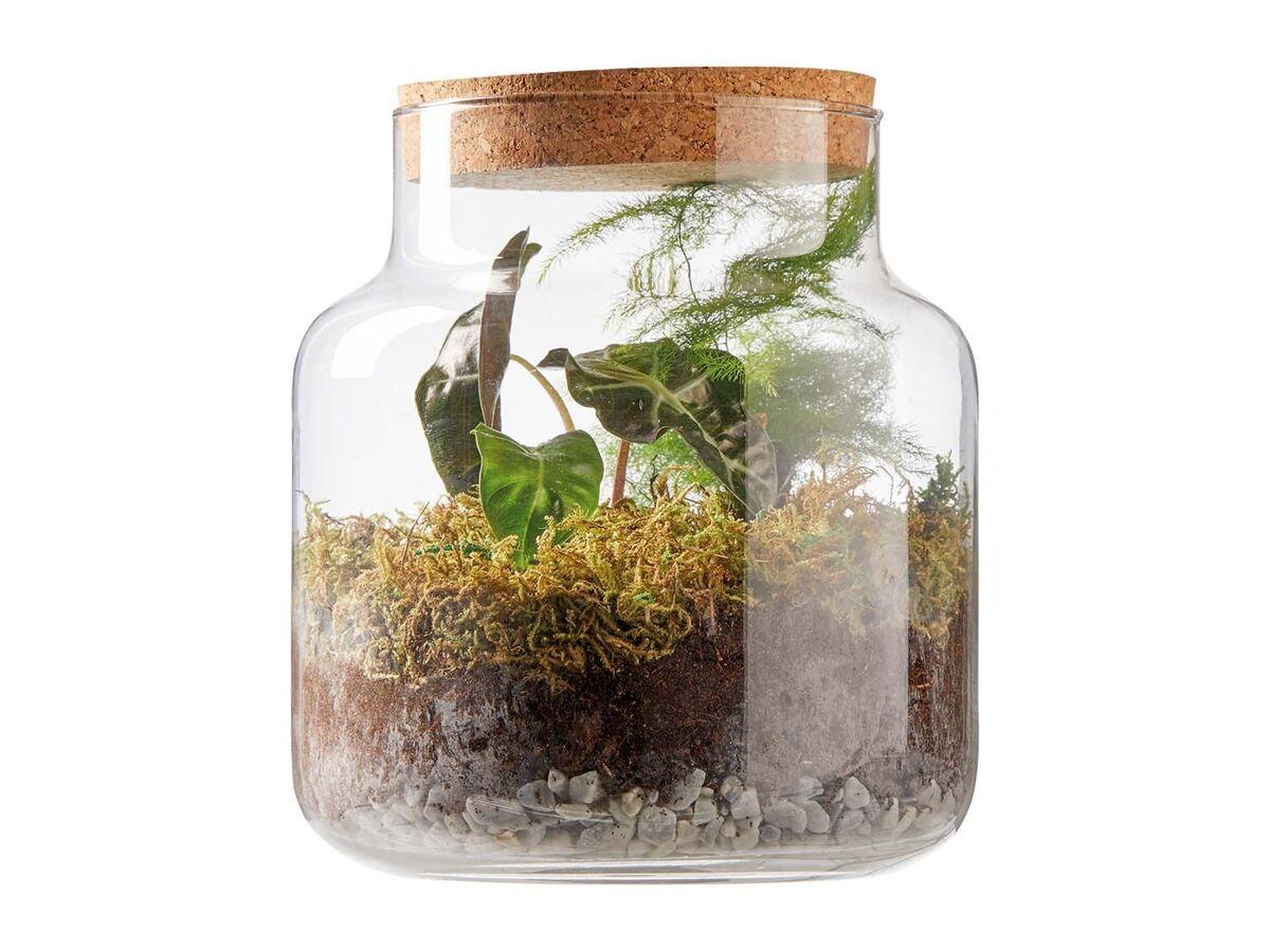 Bild 2 von Pflanzen-Terrarium