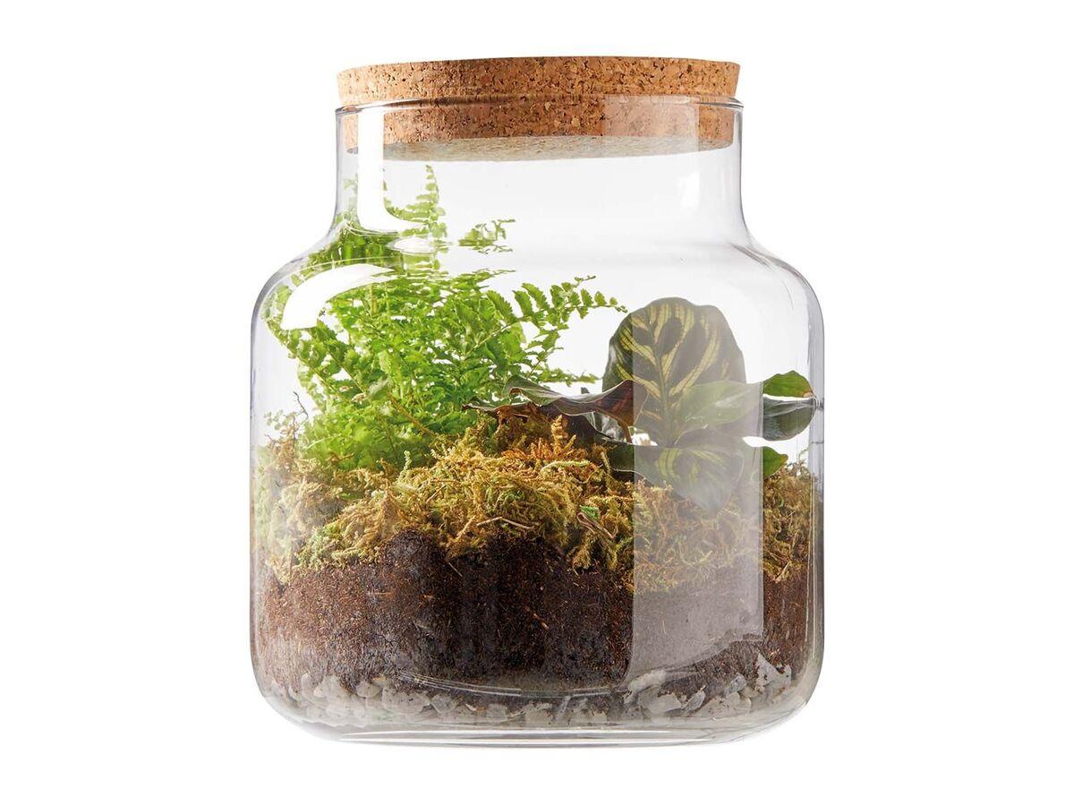 Bild 3 von Pflanzen-Terrarium