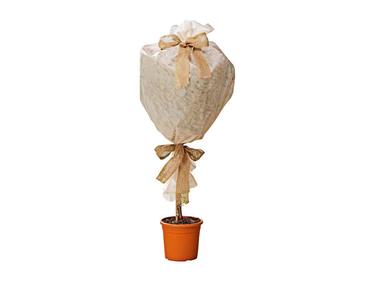 Bild 3 von FLORABEST Pflanzenschutz