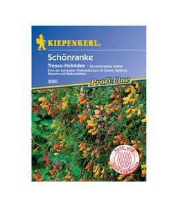 Kiepenkerl Samen 'Schönranke'