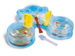 Clementoni Experimentierset »Salzkrebse Maxi«, zum Züchten von Salzkrebsen, ab 8 Jahren