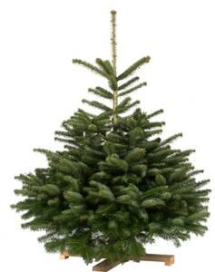 Weihnachtsbaum Nordmanntanne, 1,75 - 1,90 m Gartenmeister