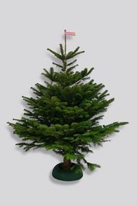"""Weihnachtsbaum Nordmanntanne, 1,20 - 1,50 m - inklusive Christbaumständer """"easy fix Mini Light"""" Gartenmeister"""