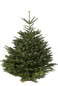 Weihnachtsbaum Nordmanntanne, 1,95 - 2,25 m Gartenmeister