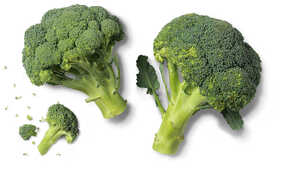 Span./ital. Broccoli