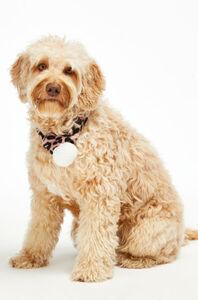Hunkemöller Schal Hund