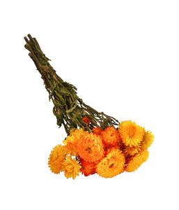 Trockenblumenbund Strohblume