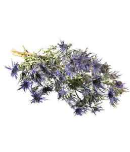 Trockenblumenbund Alpen-Mannstreu