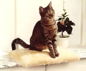 "CAT BONBON Fensterliege ""Amy"" beige"