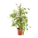 Bild 3 von GARDENLINE     Grünpflanze