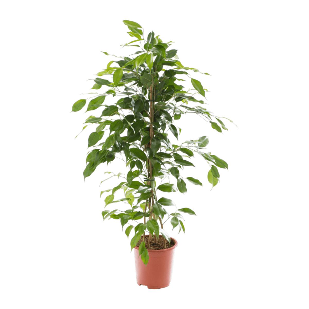 Bild 5 von GARDENLINE     Grünpflanze