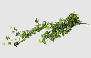 Efeu grün