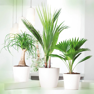 Hochwertige Grünpflanze