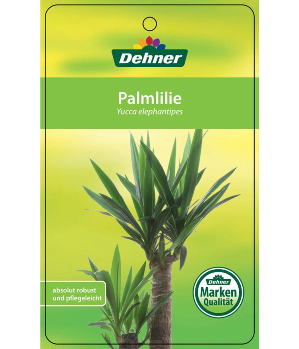 Bild 5 von Riesen-Palmlilie - Yucca-Palme