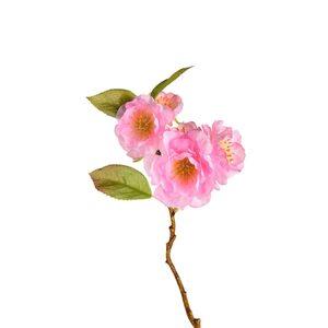 Zweig Kirschblüte