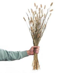 FLOWER MARKET 2x Trockenblumen Lagurusgras Länge 70cm