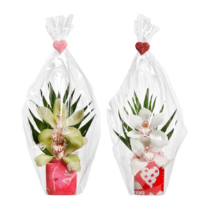 GARDENLINE     Orchideengesteck zum Frauentag