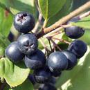 Bild 1 von Finest Garden Beerensträucher