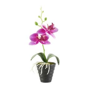 Orchidee im Topf in schwarz 24,5 cm