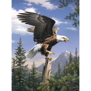 Adler, Malen nach Zahlen Set