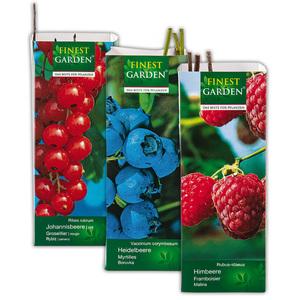 Finest Garden Beerensträucher