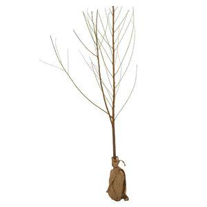GARDENLINE®  Obstbaum