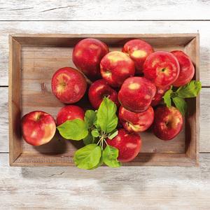 "Äpfel ""Kanzi"" aus Sachsen"