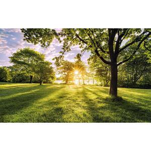 XXXLutz Vliestapete  Psh054-Vd4 Golden Moment  Bäume