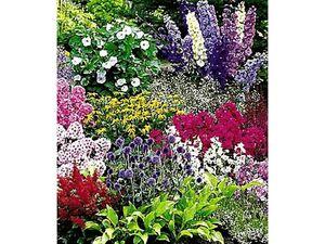 Buntes Staudenbeet 'Multi-Colour', 12 Pflanzen