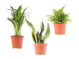 Grünpflanzenmix
