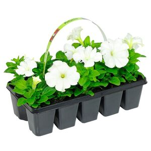 GARDENLINE®  Beetpflanzen