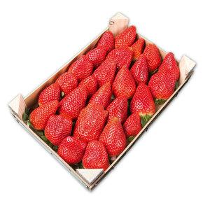 Premium Erdbeeren