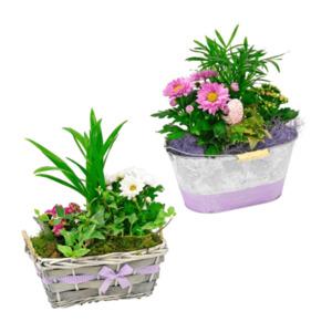 GARDENLINE     Muttertagspflanzen