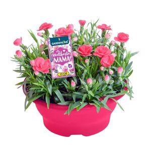 GARDENLINE®  Muttertagspflanze