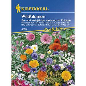 Kiepenkerl              Wildblumen Mischung mit Kräutern