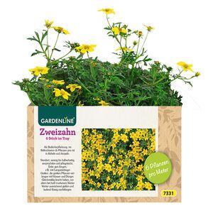 GARDENLINE®  Balkon-/Kübelpflanzen