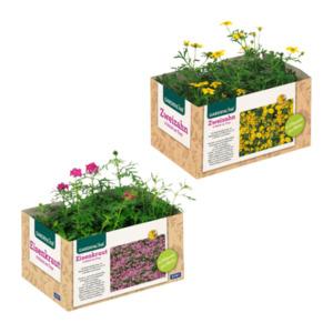 GARDENLINE   Balkon- / Kübelpflanzen