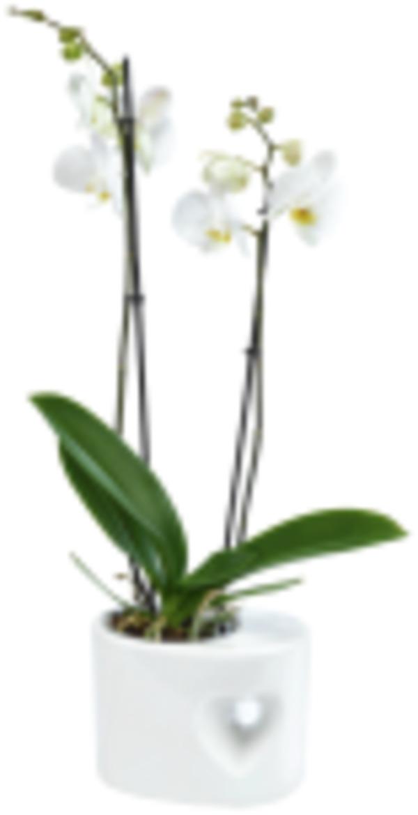 Orchideen in Herzkeramik