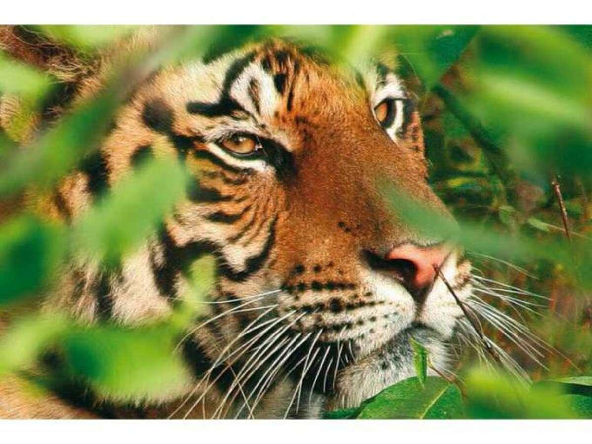 Bild 3 von Nepal – Rundreise Tradition & Natur