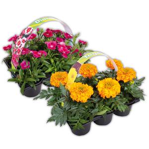 Finest Garden Exklusive Beetpflanzen